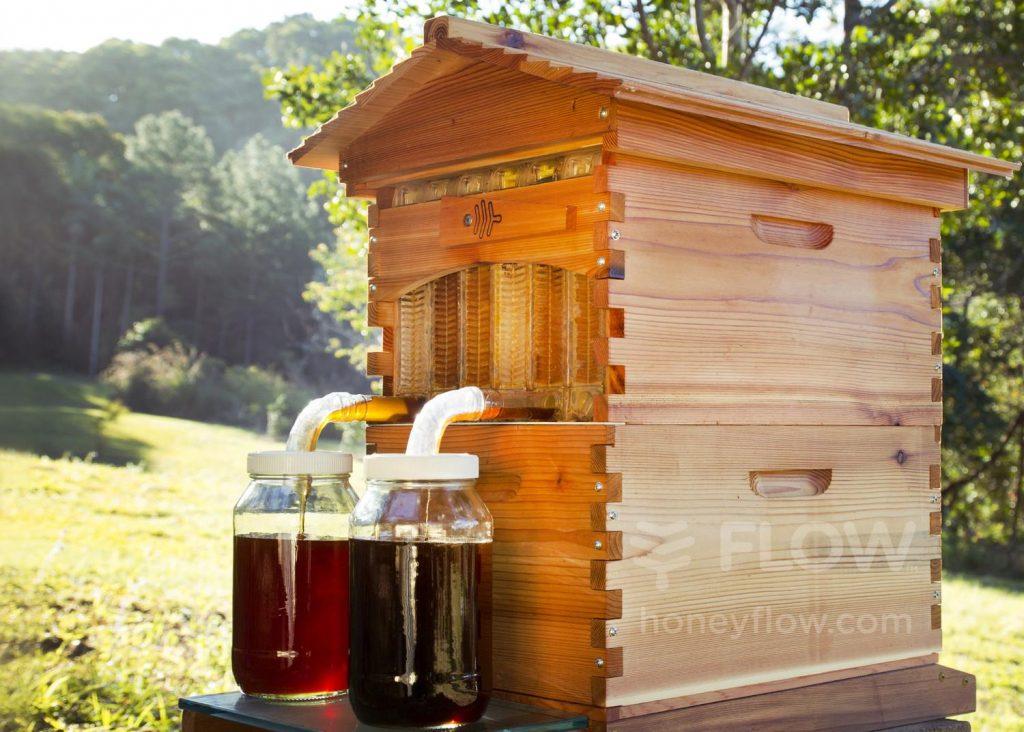 FlowHive, stup ce vă permite să obțineți miere la robinet